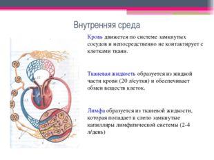 Внутренняя среда Кровь движется по системе замкнутых сосудов и непосредственн