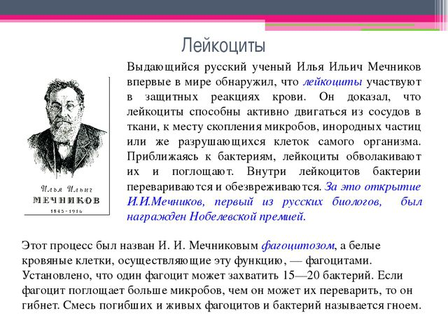 Лейкоциты Выдающийся русский ученый Илья Ильич Мечников впервые в мире обнару...
