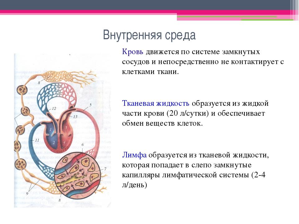 Внутренняя среда Кровь движется по системе замкнутых сосудов и непосредственн...