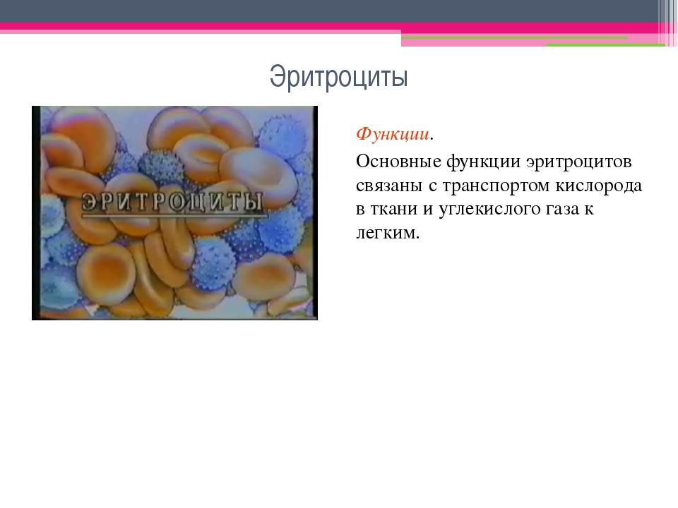 Эритроциты Функции. Основные функции эритроцитов связаны с транспортом кислор...