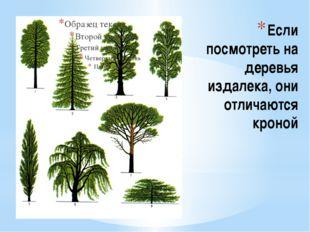 Если посмотреть на деревья издалека, они отличаются кроной