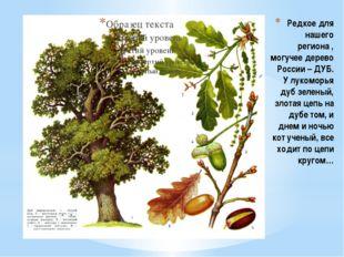 Редкое для нашего региона , могучее дерево России – ДУБ. У лукоморья дуб зеле