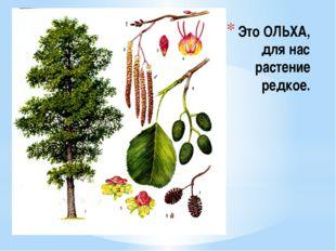 Это ОЛЬХА, для нас растение редкое.