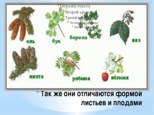 Так же они отличаются формой листьев и плодами