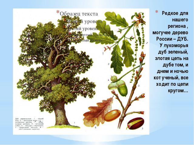 Редкое для нашего региона , могучее дерево России – ДУБ. У лукоморья дуб зеле...