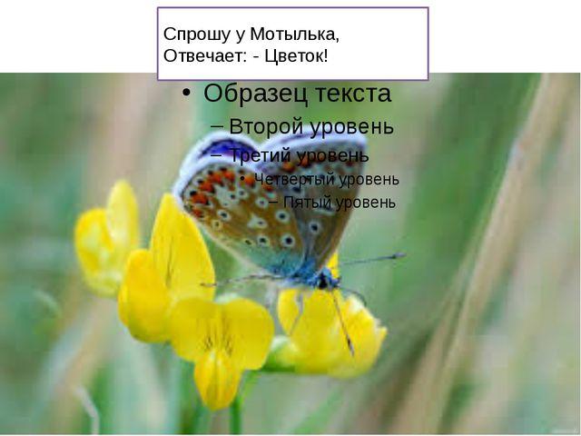 Спрошу у Мотылька, Отвечает: - Цветок!