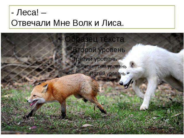 - Леса! – Отвечали Мне Волк и Лиса.