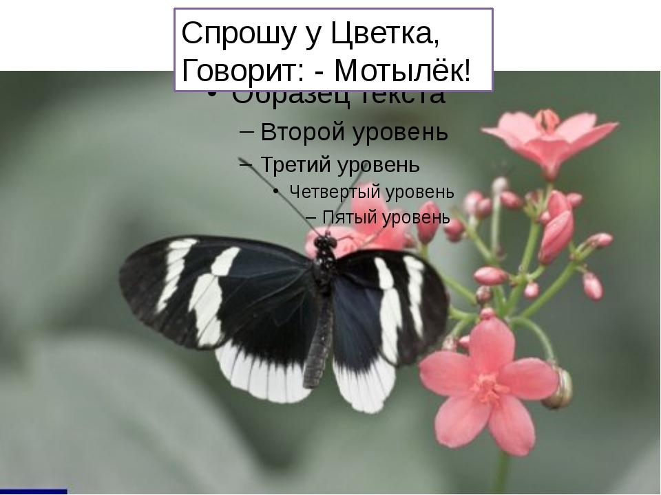 Спрошу у Цветка, Говорит: - Мотылёк!