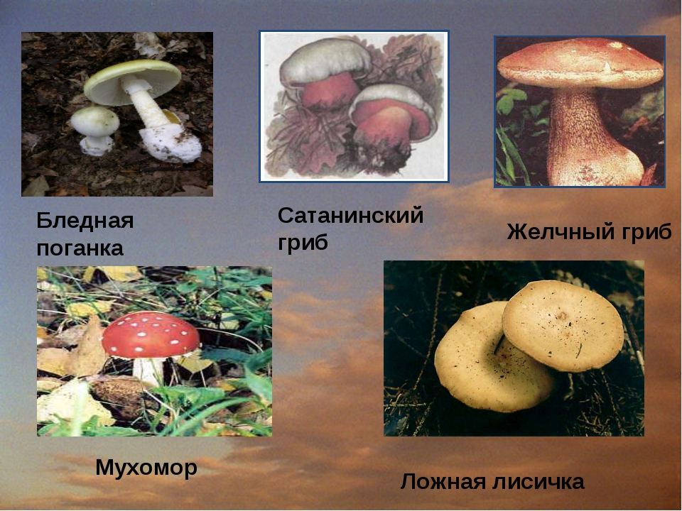 Бледная поганка Сатанинский гриб Желчный гриб Мухомор Ложная лисичка