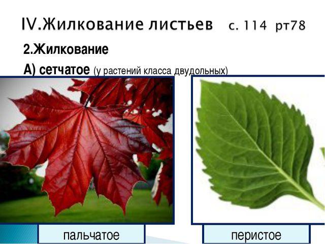 2.Жилкование А) сетчатое (у растений класса двудольных) пальчатое перистое