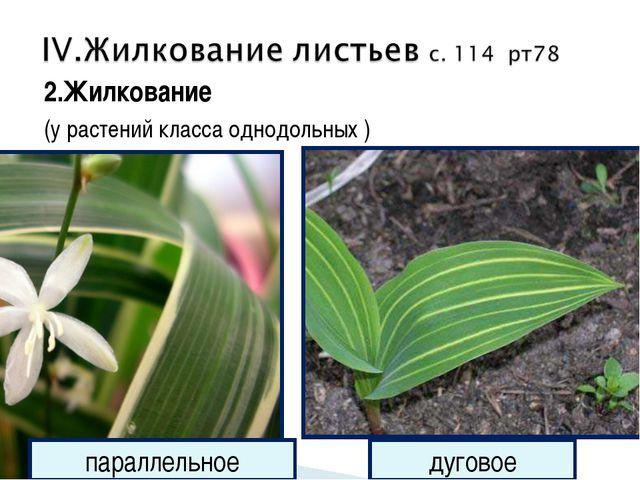 2.Жилкование (у растений класса однодольных ) параллельное дуговое