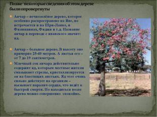 Анчар – вечнозелёное дерево, которое особенно распространено на Яве, но встре