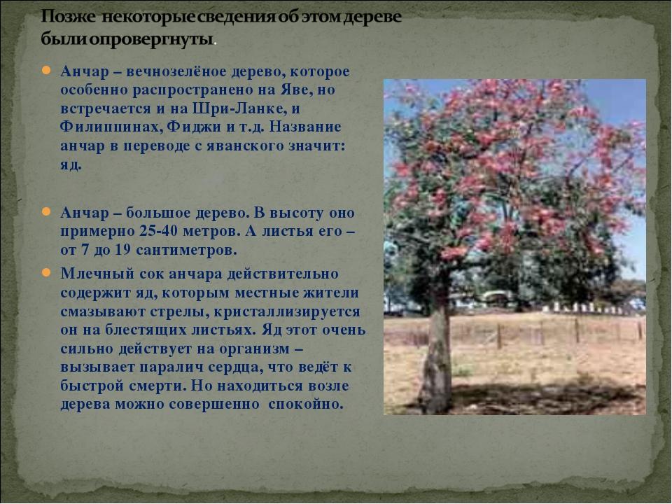 Анчар – вечнозелёное дерево, которое особенно распространено на Яве, но встре...