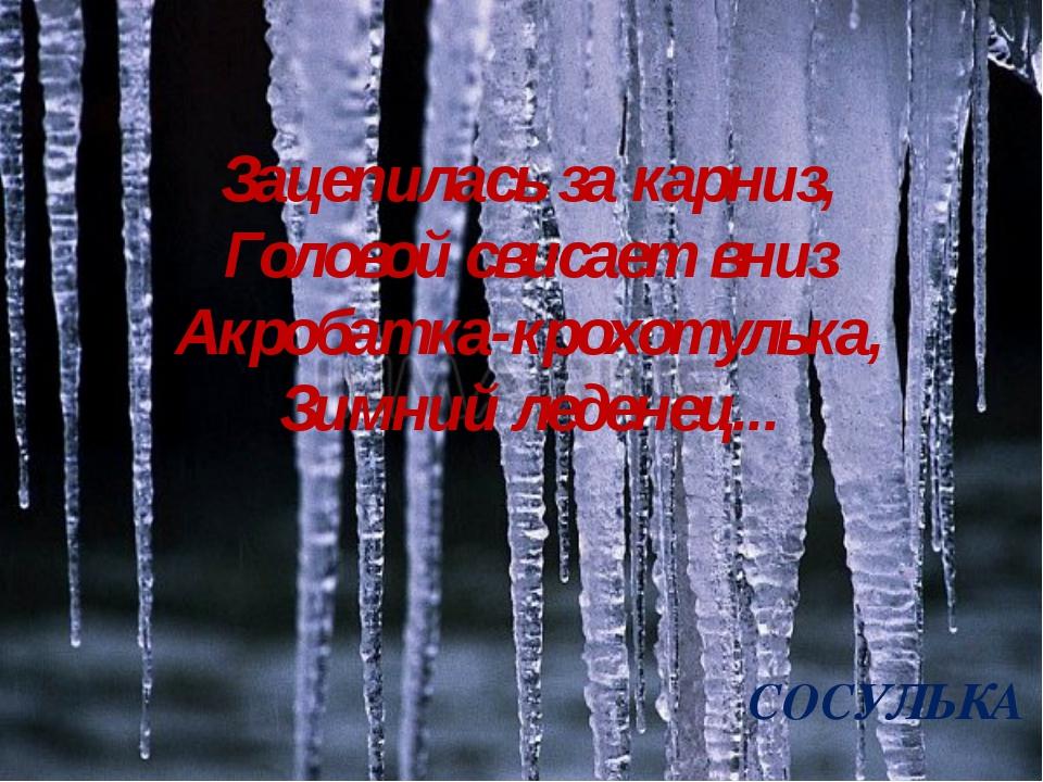 Зацепилась за карниз, Головой свисает вниз Акробатка-крохотулька, Зимний леде...