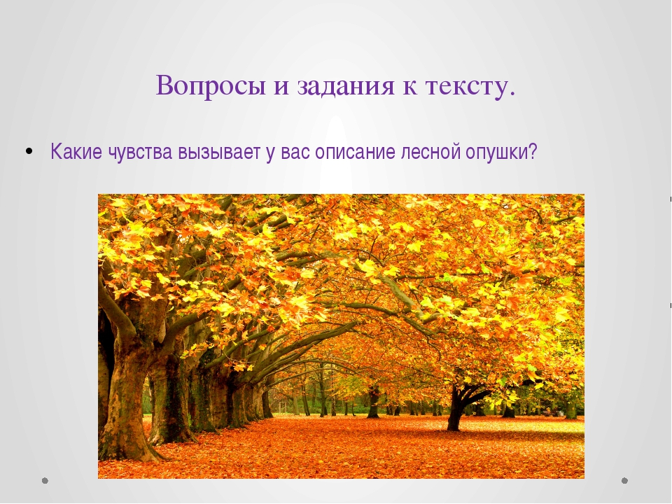 Вопросы и задания к тексту. Какие чувства вызывает у вас описание лесной опуш...