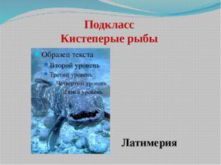 Подкласс Кистеперые рыбы Латимерия