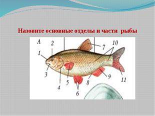 Назовите основные отделы и части рыбы