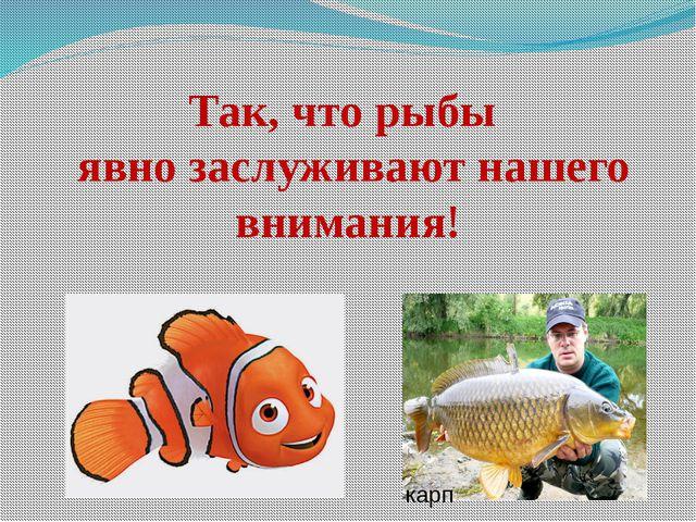Так, что рыбы явно заслуживают нашего внимания! карп