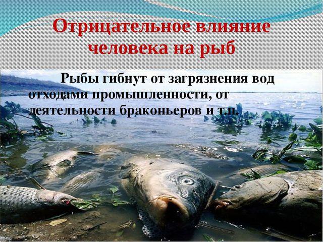 Отрицательное влияние человека на рыб Рыбы гибнут от загрязнения вод отход...