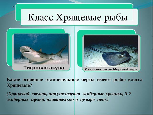 Какие основные отличительные черты имеют рыбы класса Хрящевые? (Хрящевой скел...