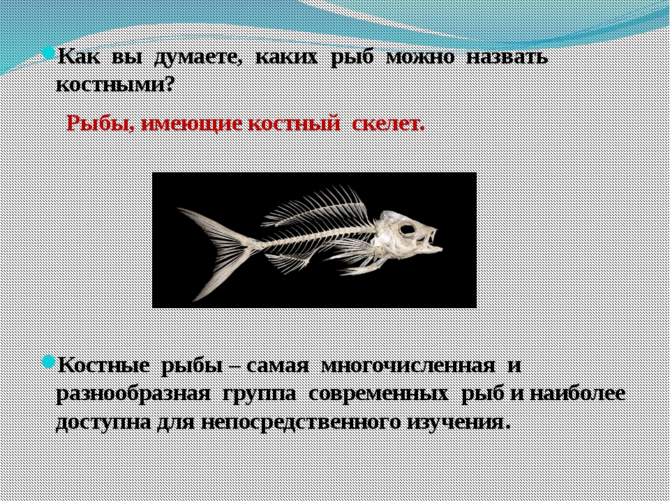 Как вы думаете, каких рыб можно назвать костными? Рыбы, имеющие костный скел...