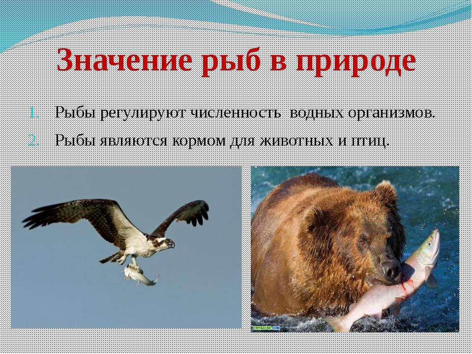 Значение рыб в природе Рыбы регулируют численность водных организмов. Рыбы яв...