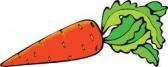 http://www.fotokanal.com/thumbnails/69/carrot_18.jpg