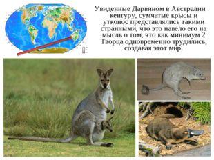 Увиденные Дарвином в Австралии кенгуру, сумчатые крысы и утконос представляли