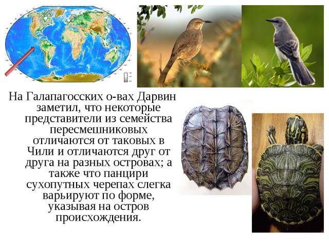 На Галапагосских о-вах Дарвин заметил, что некоторые представители из семейст...