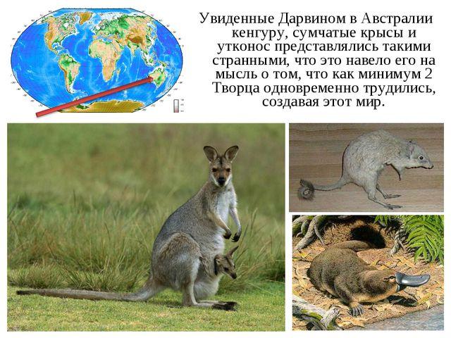 Увиденные Дарвином в Австралии кенгуру, сумчатые крысы и утконос представляли...
