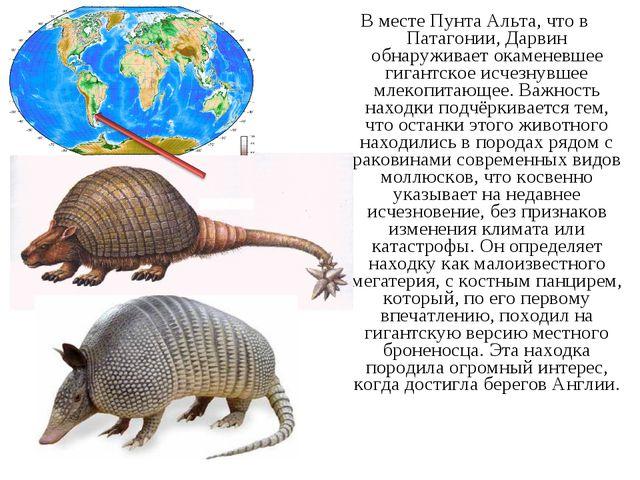 В месте Пунта Альта, что в Патагонии, Дарвин обнаруживает окаменевшее гигантс...
