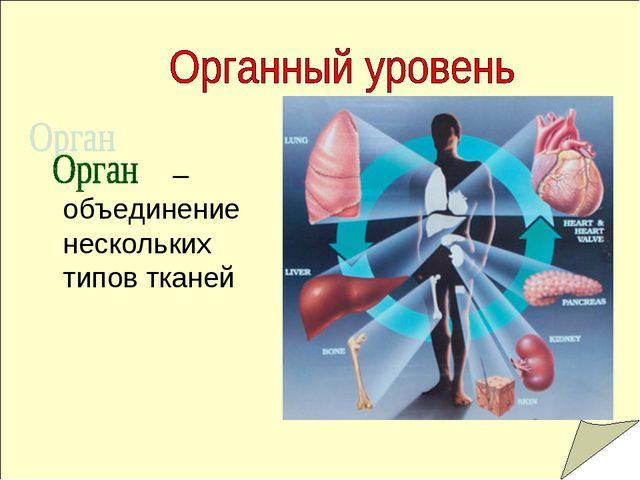 – объединение нескольких типов тканей