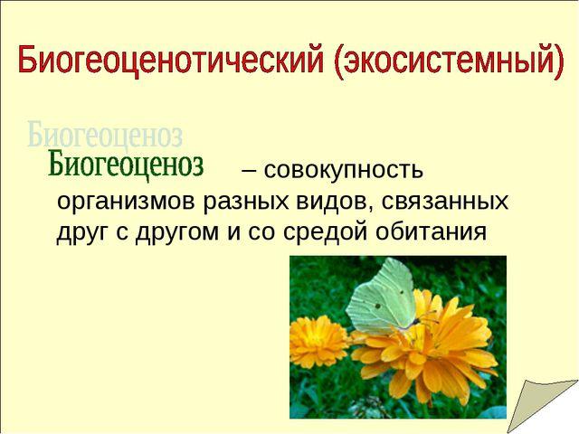 – совокупность организмов разных видов, связанных друг с другом и со средой...