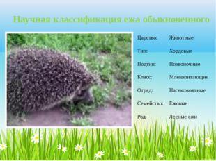 Научная классификация ежа обыкновенного Царство: Животные Тип: Хордовые Подти