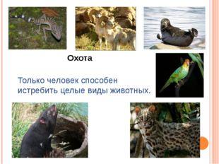 Только человек способен истребить целые виды животных. Охота