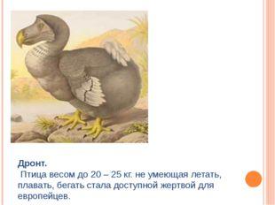 Дронт. Птица весом до 20 – 25 кг. не умеющая летать, плавать, бегать стала до