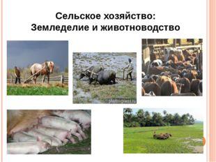 Сельское хозяйство: Земледелие и животноводство
