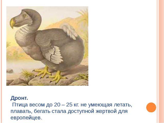 Дронт. Птица весом до 20 – 25 кг. не умеющая летать, плавать, бегать стала до...