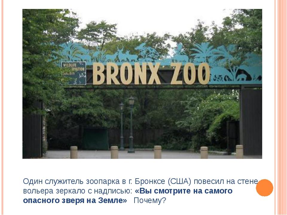 Один служитель зоопарка в г. Бронксе (США) повесил на стене вольера зеркало с...