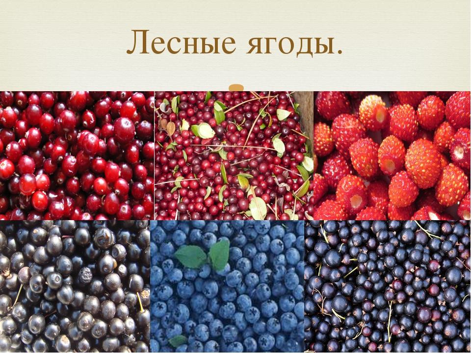Лесные ягоды. 