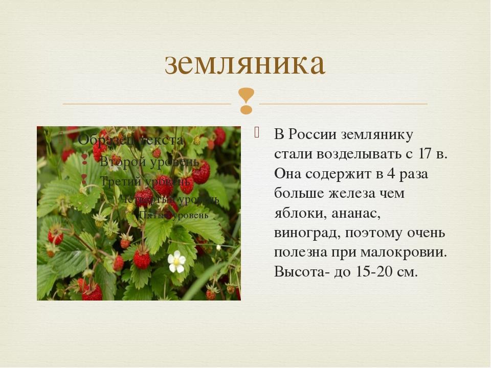 земляника В России землянику стали возделывать с 17 в. Она содержит в 4 раза...