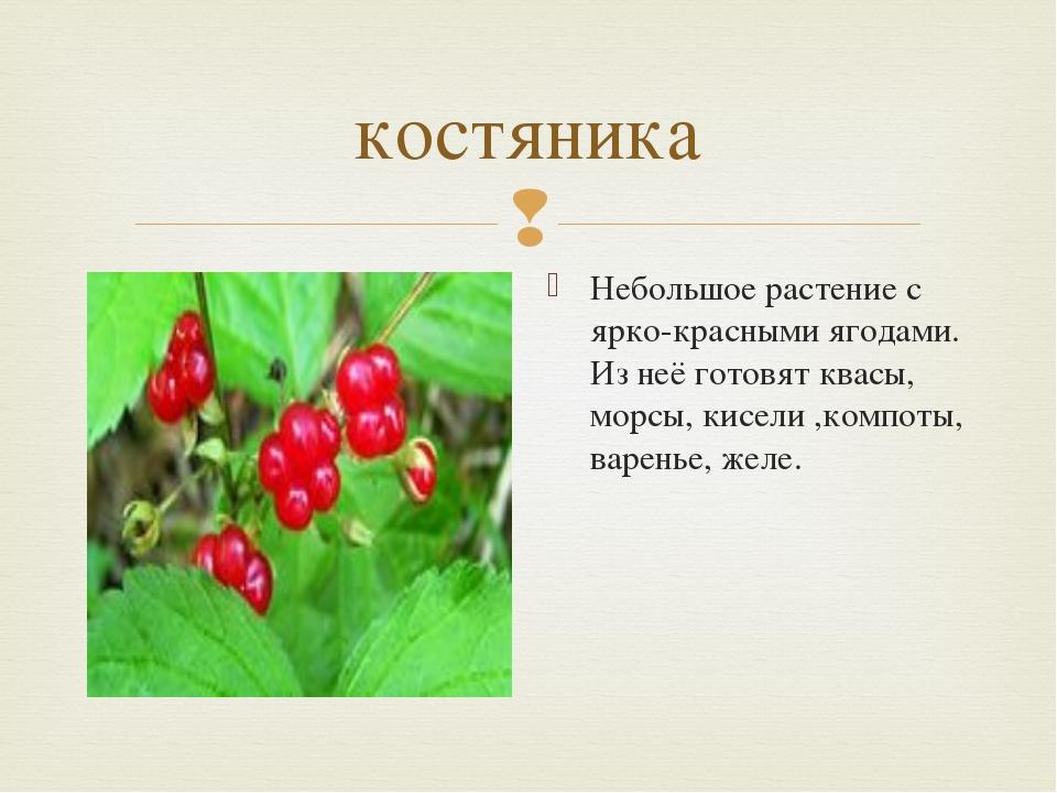 костяника Небольшое растение с ярко-красными ягодами. Из неё готовят квасы, м...