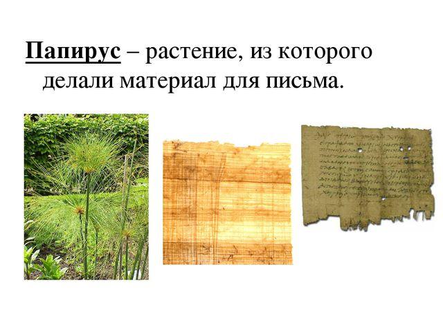 Папирус – растение, из которого делали материал для письма.