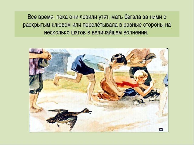Все время, пока они ловили утят, мать бегала за ними с раскрытым клювом или п...