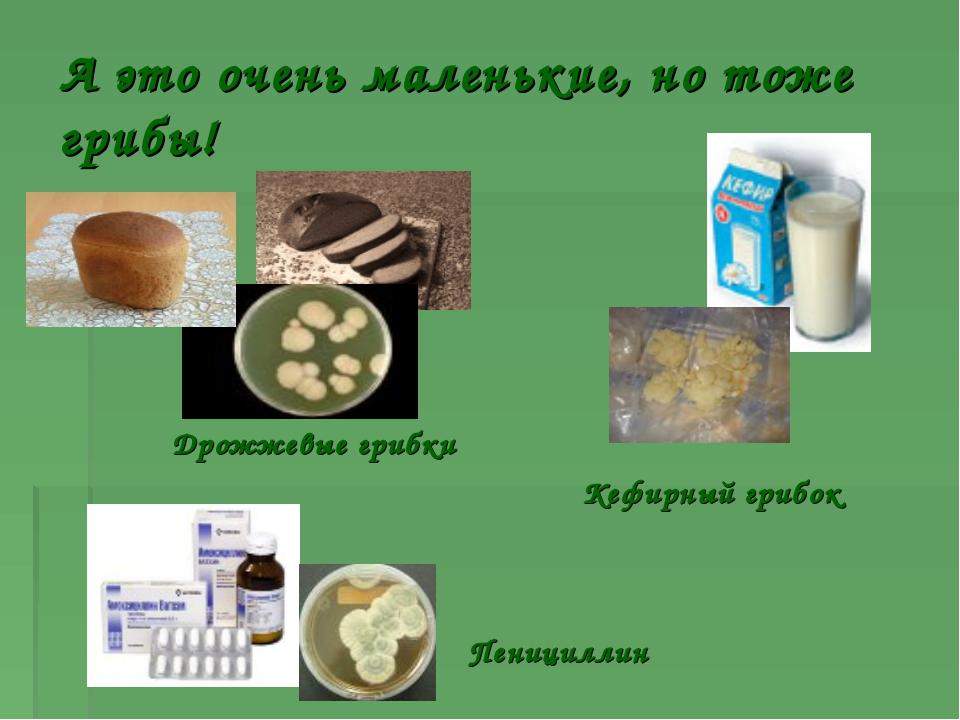 Класс базидиомицеты шляпочные грибы