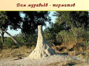 Дом муравьёв - термитов п