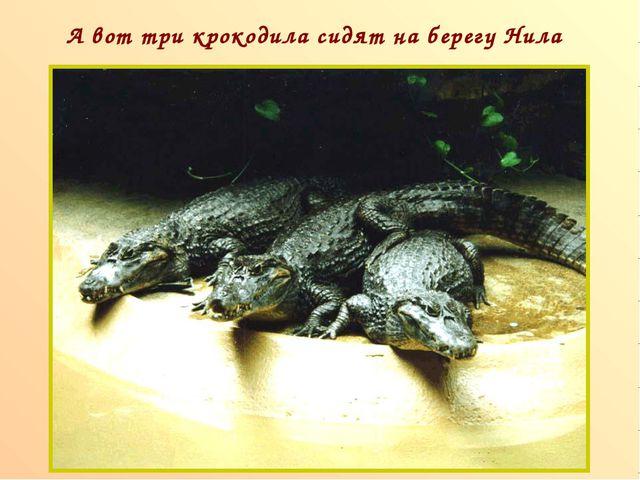 А вот три крокодила сидят на берегу Нила п