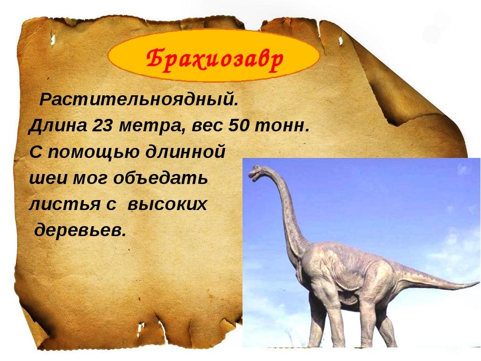 Растительноядный. Длина 23 метра, вес 50 тонн. С помощью длинной шеи мог объ...