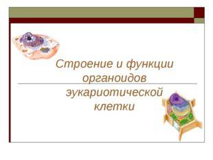 Строение и функции органоидов эукариотической клетки