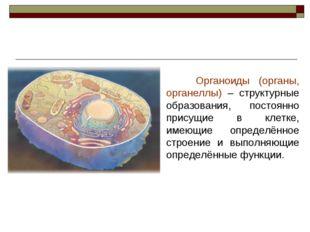 Органоиды (органы, органеллы) – структурные образования, постоянно присущие